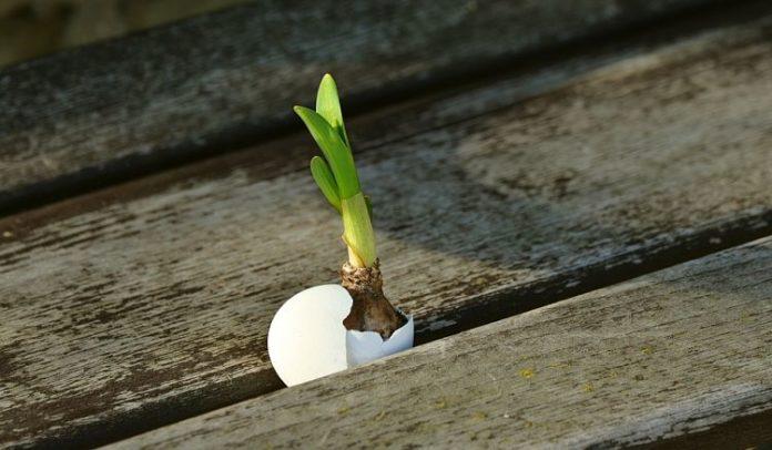 live onion