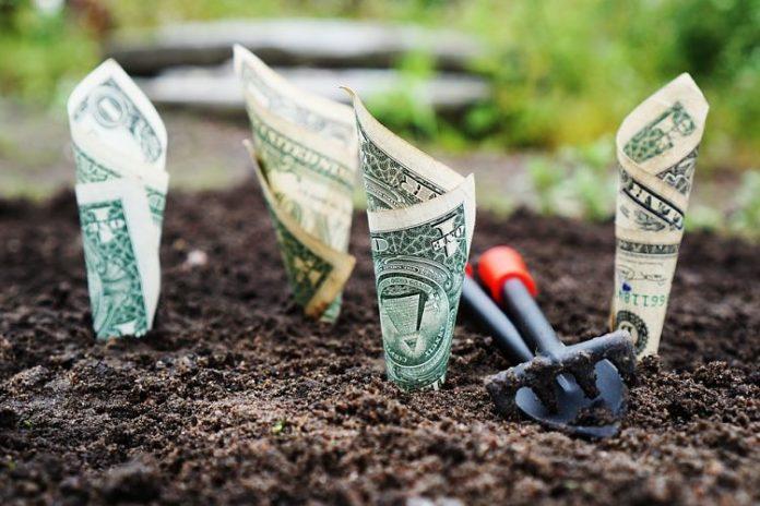 money grow